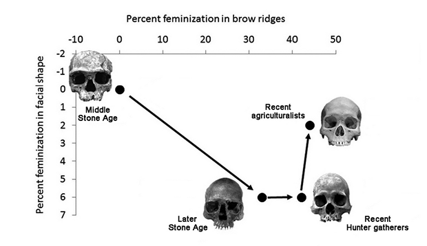 New study suggests, culture and order were the effect of homo sapiens becoming more feminine. Image 1.