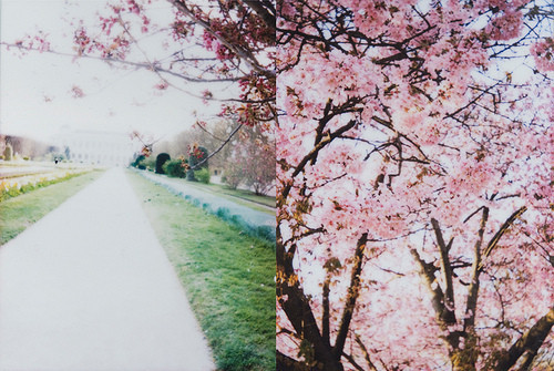 Никогда не надо слушать, что говорят цветы. Надо просто смотреть на них и дышать их ароматом — Фотография на Look At Me