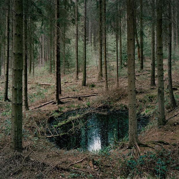 Галерея: как война изменила леса Германии