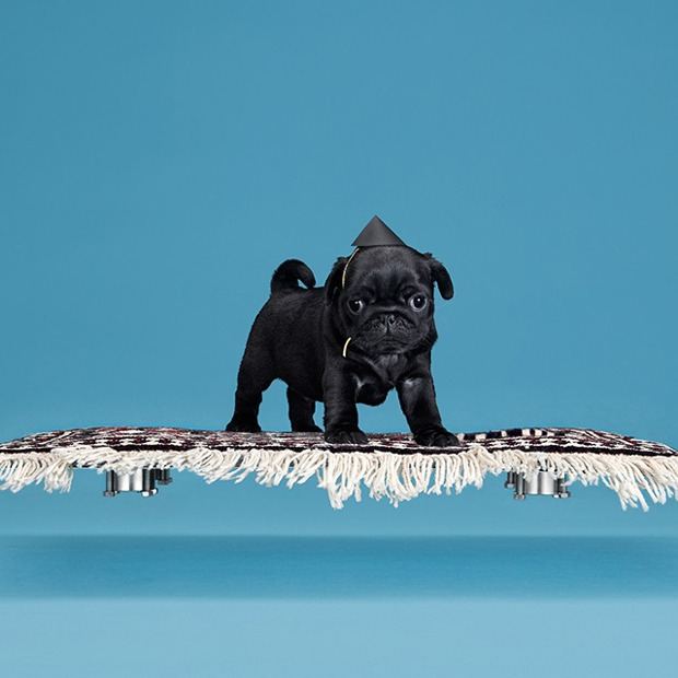 10 гаджетов для домашних животных