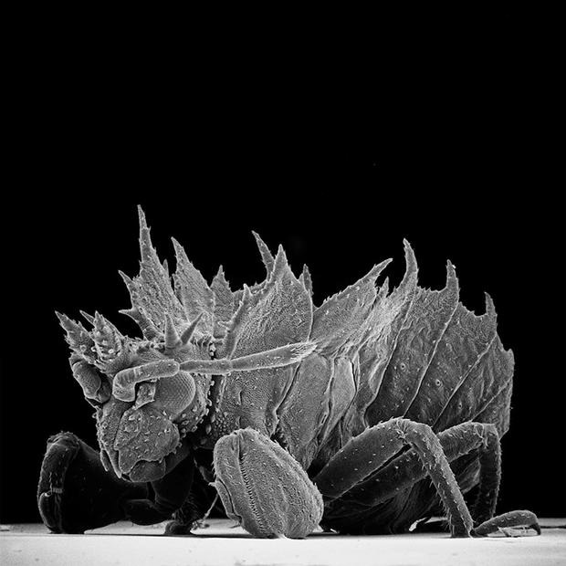 Как насекомые выглядят под микроскопом:  9 высокоточных изображений