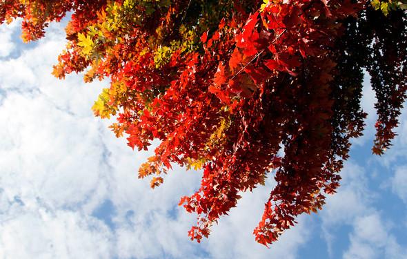 Осень постучала в двери — Фотография на Look At Me