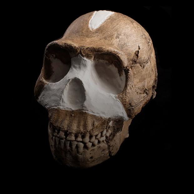 Что надо знать о палеонтологической находке года