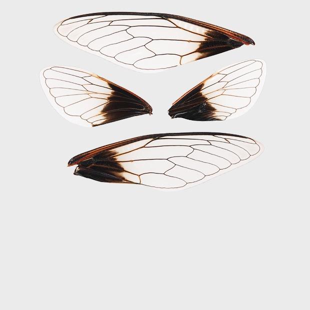 Этично ли убивать насекомых?  — Вопрос на Look At Me