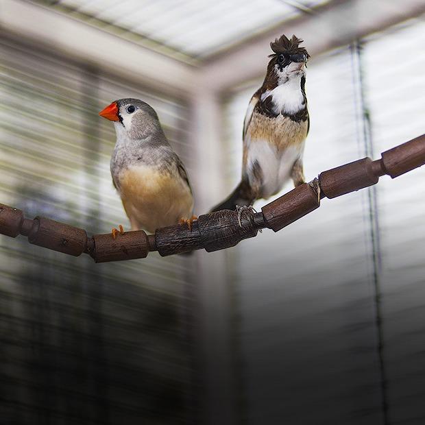 Экзотические птицы и старинные паркеты в архитектурном бюро «Практика» — Репортаж на Look At Me