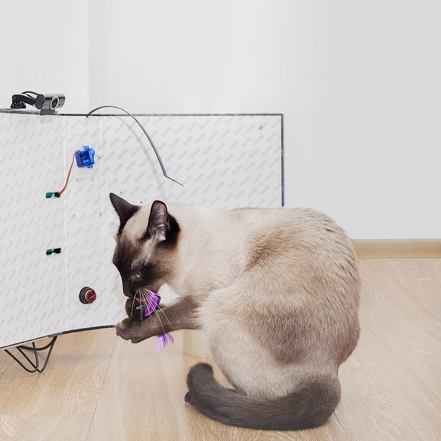 Как сделать фотобудку  для кота