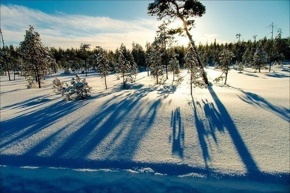 Выходные в шведском лесу — Фотография на Look At Me