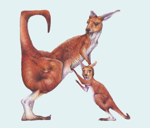 Животный алфавит — Иллюстрация на Look At Me