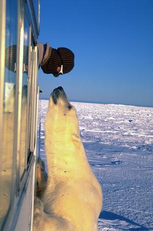 Журнал Wired составил топ арктических фотографий — Фотография на Look At Me