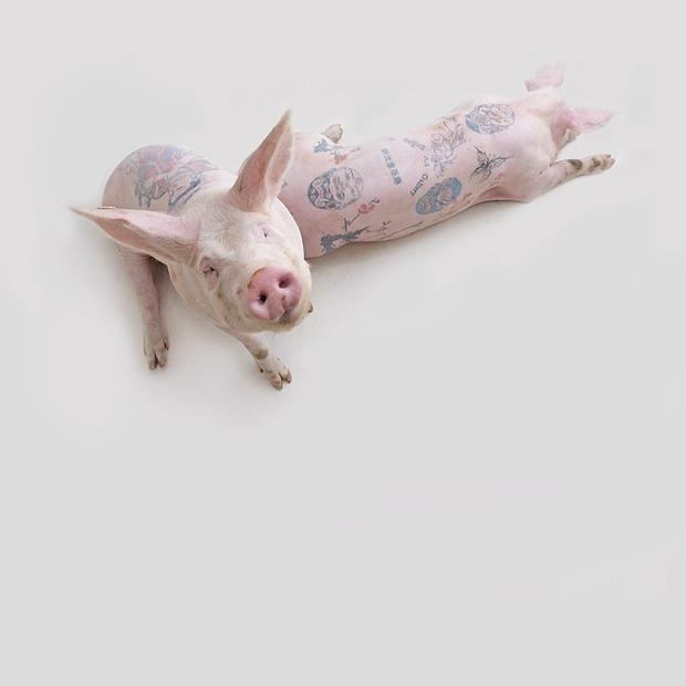 Почему голодная собака  и татуированные свиньи — это искусство — Списки на Look At Me