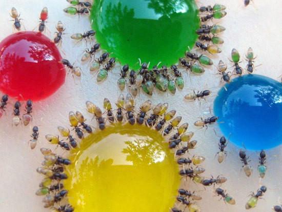 С помощью сладостей муравьёв-призраков можно раскрасить в разные цвета — Дизайн на Look At Me