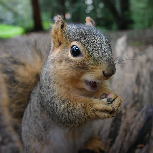 Почему животные звучат  в человеческих языках по-разному?