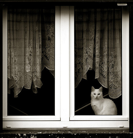Cat. Window — Фотография на Look At Me