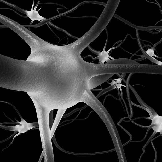 За логику и творчество отвечают разные полушария мозга? — Заблуждение  на Look At Me