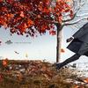 Волшебная рекламная кампания Hermès осень-зима 2012