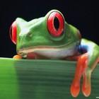 Почему у лягушки пиписька зеленая?