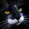 23 фото. Красивейшие кошки