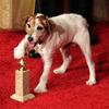 Собачья работа: изданы мемуары собаки, сыгравшей в «Воды слонам» и «Ар