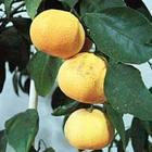Оранжевый витамин