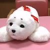 В японских домах престарелых пациентов лечат роботами-тюленями