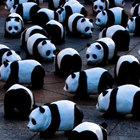 Панды в городе