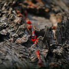 Химчан принуждают подписываться за вырубку леса!