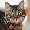Кот в ошейнике WarKitteh помог хакеру взломать Wi-Fi