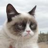 Grumpy Cat станет героем голливудского фильма
