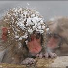 И даже обезьянам нужен отдых
