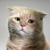 В Новой Зеландии хотят избавиться от котов