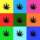 Ученые потеряли связь между марихуаной и шизофренией