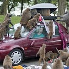 Бабуины на ЧМ 2010 предпочитают Пино-нуар!