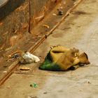 Вступится ли PETA за Pleo