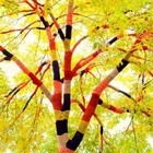 Одежда для деревьев