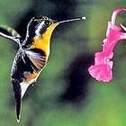 Шпионские мини роботы-колибри будут подглядывать
