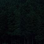 Темный лес Кейты Сигиуры