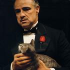 Как вести успешный бизнес: 7 дельных советов от мафии