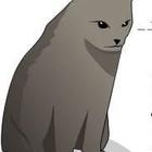 Как узнать, что ваш кот собирается вас убить