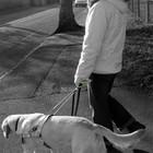 GPS виляет собакой