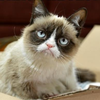 Grumpy Cat появилась в рекламе кошачьего корма