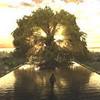 Здравствуй, дерево: Итоги Каннского кинофестиваля