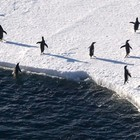 Антарктические сны. Красоты южного полюса