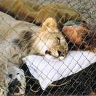 Любовь между людьми и животными