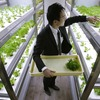 Сотрудники японского офиса могут собирать урожай на рабочем месте