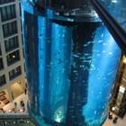 Самый «маленький» аквариум