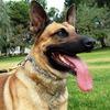 Полицейскую собаку научили искать жёсткие диски с порнографией