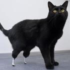 Удивительная история кота Оскара