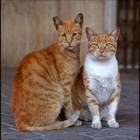 Блудливые коты