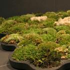 The Moss Carpet