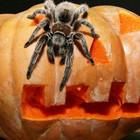 Хэллоуин и тыквомания в Германии и Америке